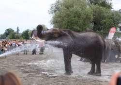 Idén is elefántfürdetéssel indul a Cirkuszok éjszakája